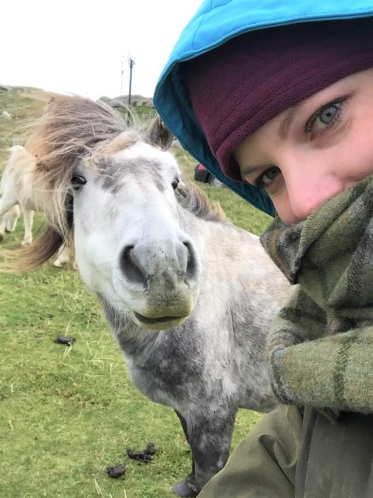 Wilde Pferde auf der Insel Eriskay auf den schottischen Hebriden