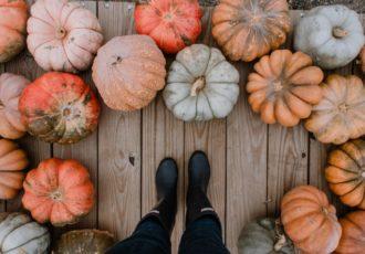 Herbstkürbisse auf dem boden