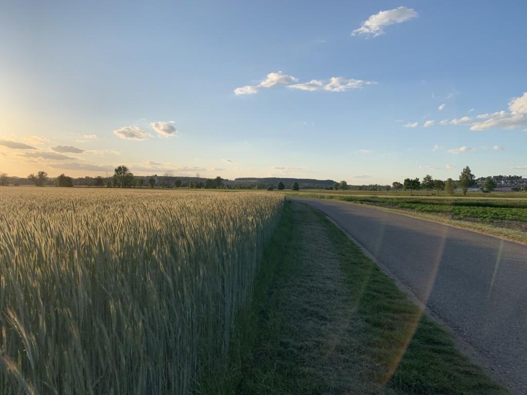 Sommerabend zwischen Kornfeldern